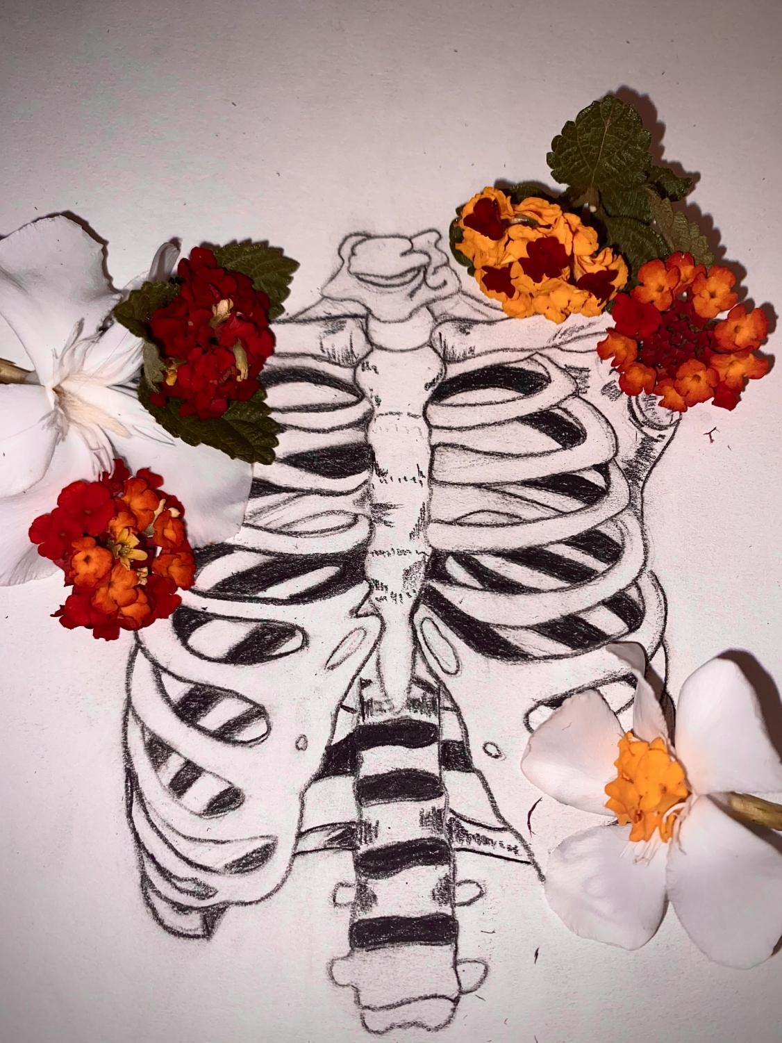 An Ode to a Ribcage